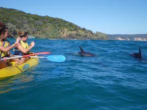 rainbow beach kayaking tours